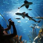 Gros plan sur les aquariums de Paris