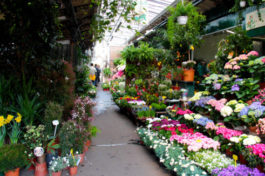 Découvrez le marché aux Fleurs et aux oiseaux de l'Ile de la Cité à Paris