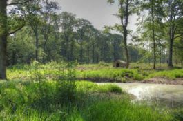 Échappez-vous et découvrez la forêt de Sénart près de Paris